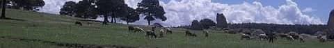 著作権フリーBGM(無料音源) Vol.08「広大な草原」