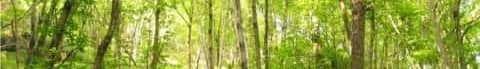 著作権フリーBGM(無料音源) Vol.10「木」